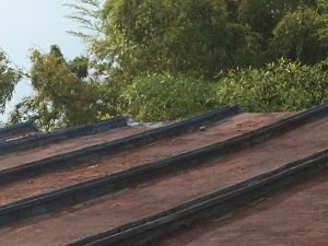 IMG_0012-300x225 雨漏りがなくなった♪ステキな屋根に大変身!