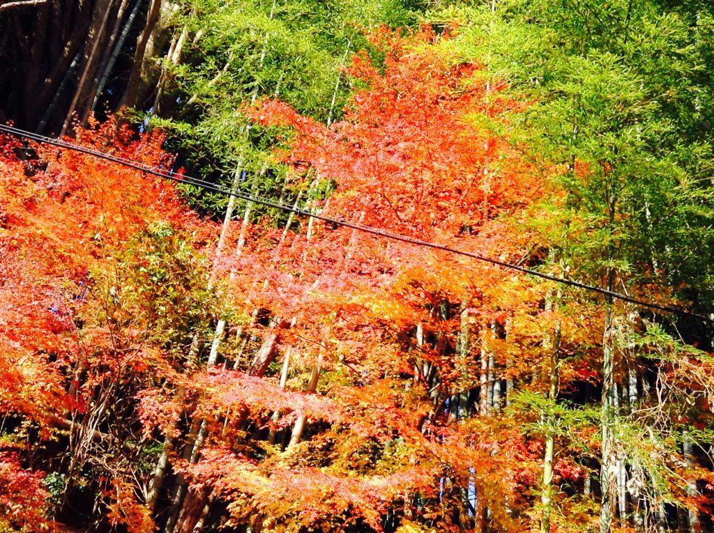 image2-5-1024x765 めぐみ舎の風景~紅葉&スタッフミーティング編~