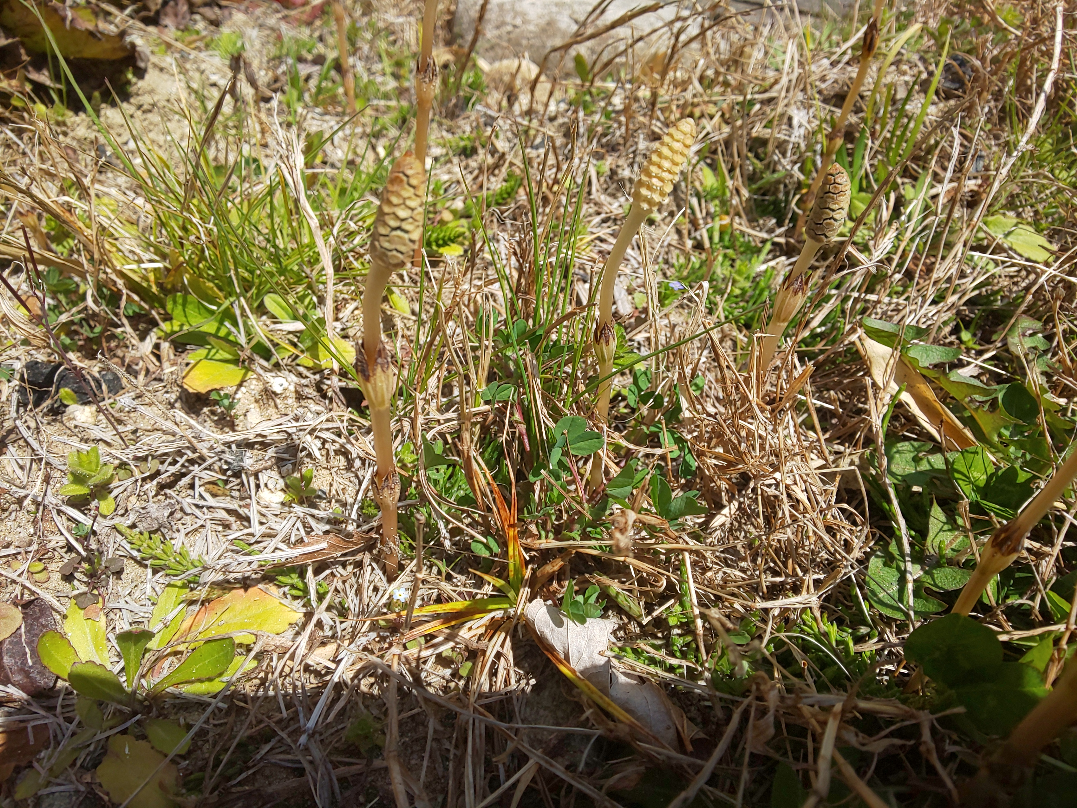 DSC_2965-e1585199596969 春の訪れ「ヒュウガミズキ」の花が咲きはじめました
