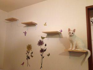 tumblr_inline_muk564l3SN1qc2yuq-300x227 キャットウォークで猫ちゃんも快適*